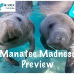 Finding Florida – Episode 15a: Manatee Madness in Crystal River Preview